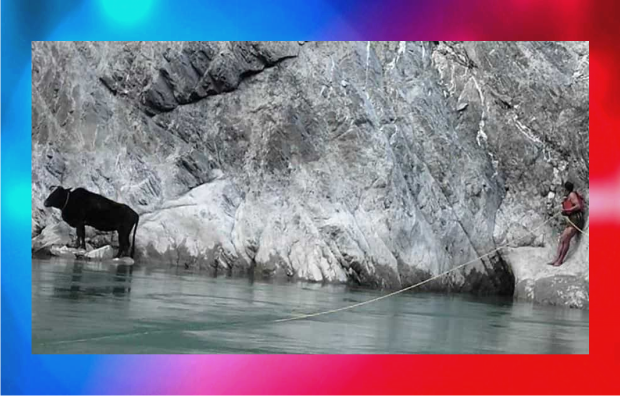 Uttarakhand Police rescued 2 cows