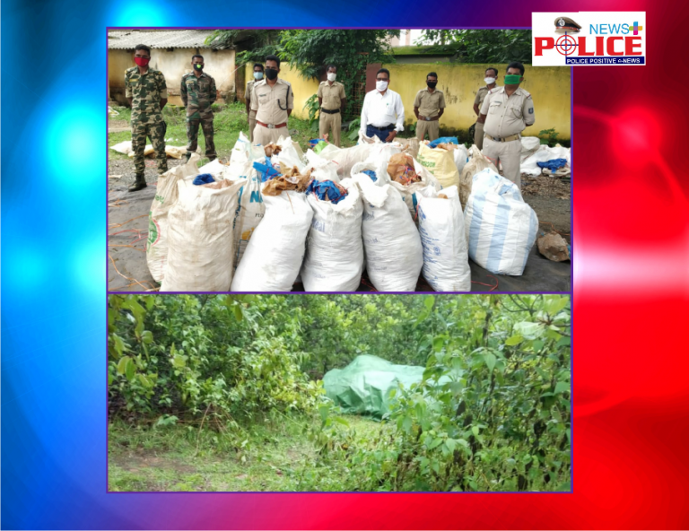 Hidden Ganja seized by Papadahandi police under the leadership of Deputy SP Mr. P. Mohapatra (Prob)